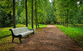 Empty linden alley and a bench in the park Royalty Free Stock Photo