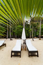 Empty luxury beach beds under a palm tree Royalty Free Stock Photo