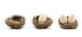 Empty nest and eggs inside the nests Royalty Free Stock Photo