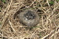 Empty nest little beautiful bird Stock Image