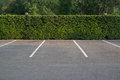Empty parking lot with foliage wall in the background Royalty Free Stock Photo