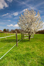 Empty pasture for cattle in spring on the small farm Royalty Free Stock Photos