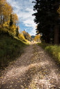 Mountain trail with fall leaves Royalty Free Stock Photo