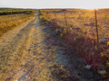 Empty path at sunset Royalty Free Stock Photo
