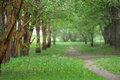 Empty pathway along old green trees, saplings in a city park Royalty Free Stock Photo