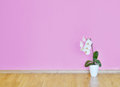 Empty pink wall and wooden floor room Stock Images