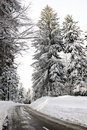 Empty road in the snowbound wood Stock Photos