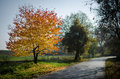 Empty romantic road in autumn time Royalty Free Stock Photo