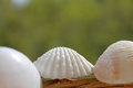 Empty shells of molluscs on the background of nature wicker basket Stock Photos