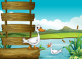An empty signboard with ducks illustration of Royalty Free Stock Photos