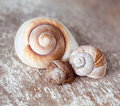 Empty Snail Shells Royalty Free Stock Image