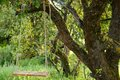 Empty swing in the park summer warm forest Royalty Free Stock Images