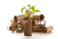 Empty toilet paper roll made into a planter recycled as seedling Royalty Free Stock Photography