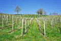 Empty vineyard with posts wooden Royalty Free Stock Photography