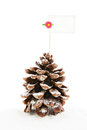 Empty white card cone pine wth for christmass message isolated background Royalty Free Stock Photo