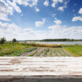 Empty white wooden table. Rows of plants in a cultivated farmers field Royalty Free Stock Photo