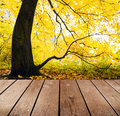 Empty wooden deck table in the park ready for product montage display Royalty Free Stock Images