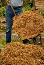 Emptying barrow of manure man wheelbarrow full horse Stock Photo