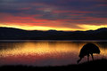 Emu in australia australian against a vibrant sunset over the bay tasmania Stock Photography