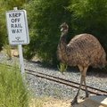 Emu on the railway an crossing miniature line at cohunu koala park in western australia sign says keep off use Stock Photography