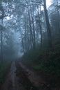 En el brumoso y profundo en bosque Foto de archivo