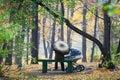 En parque del otoño Fotos de archivo libres de regalías