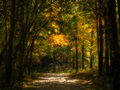 Enchanted autumn forest a beatiful scene with warm tones of yellow and greens in the trees phot has been given an effect to Stock Photography