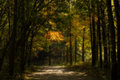 Enchanted autumn forest a beautiful scene with vibrant tones of yellow oranges and greens in the trees a dirt path leads you into Royalty Free Stock Image