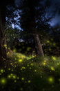 Enchanted Dark Forest Royalty Free Stock Photo