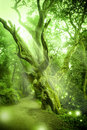 Enchanted Forest Royalty Free Stock Photo