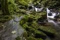 Enchanted Forest and creek near Torc Waterfall, Killarney National Park, County Kerry, Ireland. Royalty Free Stock Photo