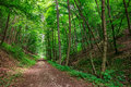 Enchanted forest path Royalty Free Stock Photo