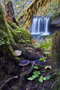 Enchanted forest with waterfall mossy tree and mushrooms Royalty Free Stock Photo
