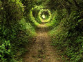 Enchanted tunnel path in the forest Royalty Free Stock Photo