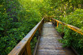 Enchanted Wooden Path Royalty Free Stock Photos