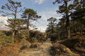 Enchanting asian forest landscape on trail to everest base camp nepal Stock Image