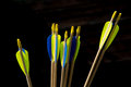 End of arrows bunch yellow and blue archery Stock Images