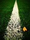 End of football season. Dry birch leaf fallen on ground of plastic green football turf with painted white line . Dramatic colors. Royalty Free Stock Photo