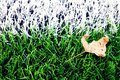 End of football season. Dry leaf on ground of plastic green football turf with painted white line . Royalty Free Stock Photo