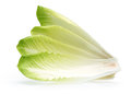Endive on a white background Stock Photography