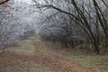 Endless trail in a winter forest with fallen leaves and frosty trees Stock Photography
