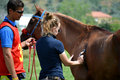 Endurance riding championship vet check Royalty Free Stock Photography