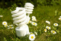 Energy saving bulbs on daisy field Royalty Free Stock Images