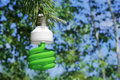 Energy saving light bulb on a branch of pine Stock Photography