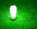 Energy saving light bulb glowing on a green field conservation concept Royalty Free Stock Photos