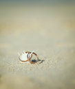 Engagement rings two golden on the seashell on the beach Royalty Free Stock Images