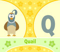 The english alphabet q with quail Stock Photos