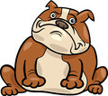 English bulldog dog cartoon illustration Stock Photos