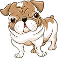 English bulldog funny illustration with puppy drawn in cartoon style Royalty Free Stock Image