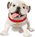 English bulldog illustration of with red collar Stock Images